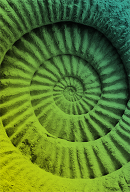 afbeelding schelp